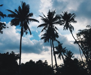 blue, clouds, and palm image