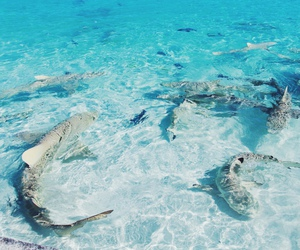 ocean, sea, and sharks image