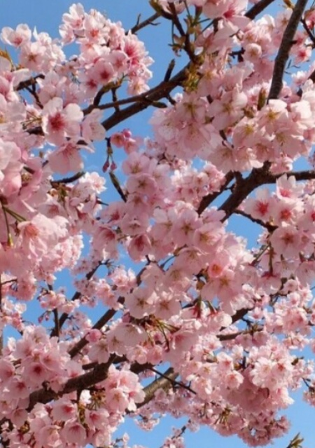Fiori We Heart It.Il Pesco Uploaded By Top Ariana On We Heart It
