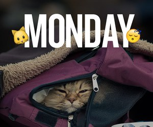 monday, cat, and cute image
