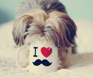 dog, mustache, and puppy image