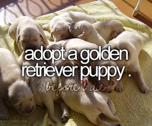 adopt, before i die, and dog image