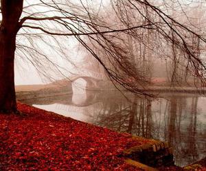 bridge, leaves, and tree image