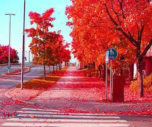 red, tree, and autumn image