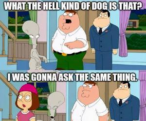 funny, american dad, and family guy image