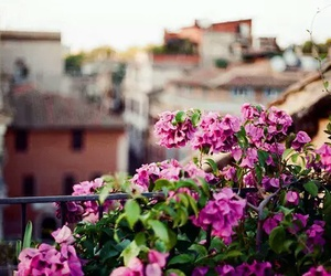 flowers, italy, and morning image