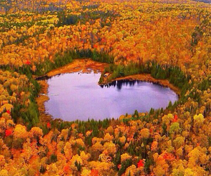 heart, nature, and autumn image