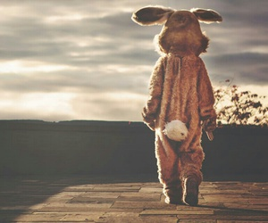 rabbit, bunny, and alone image