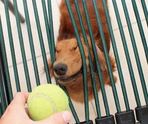 dog, animal, and cool image