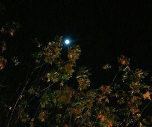 autumn, moon, and tree image