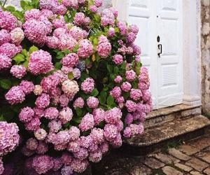 flowers, beauty, and door image