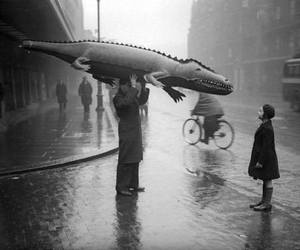 black and white, rain, and crocodile image