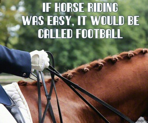 equestrian, funny, and horse image