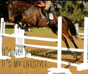 happy, showjumping, and proud image