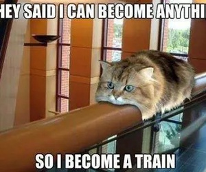 cat, funny, and train image