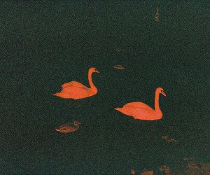 Swan and dark image