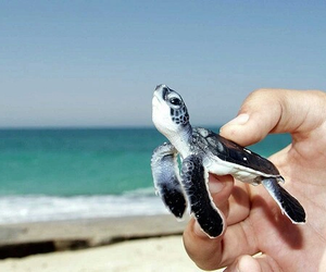 baby, beach, and turtle image