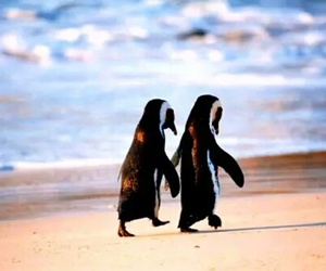 beach and pinguin image