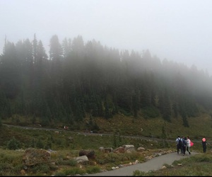 fog, green, and state image