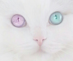 neko, kawaii desu, and pastel image