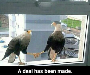 birds and funny pictures image