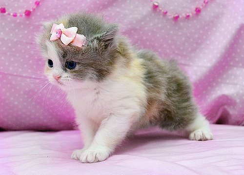 Cat Cute Kitten Inspiring Picture On Favimcom