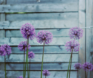 flowers, photography, and violet image