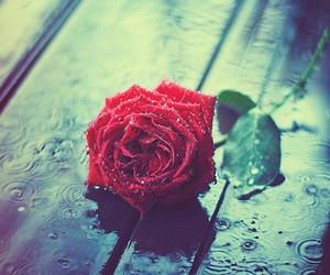 rose, flowers, and rain image