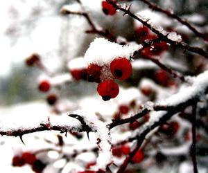 berries, branches, and bushes image