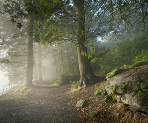 foggy, forest, and mysterious image