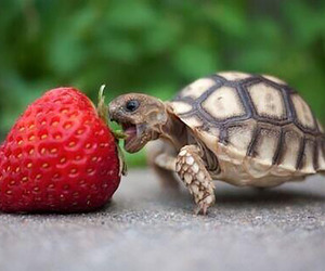 animals, strawberry, and food image