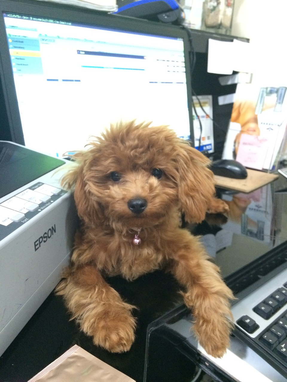 puppy, work, and cute image