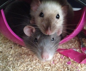 angel, bae, and rat image