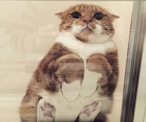 cat, animal, and funny image