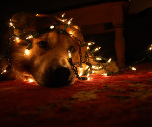 dog, lights, and pretty image