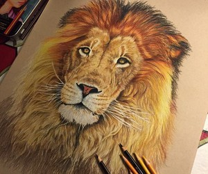 amazing, brown, and lion image
