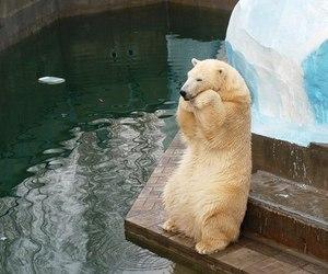 Polar Bear image