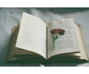 book, page, and rose image