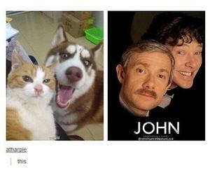 sherlock holmes, john watson, and cat image