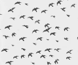 bird, fly, and sky image