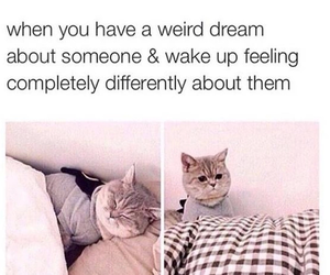 cat, Dream, and funny image
