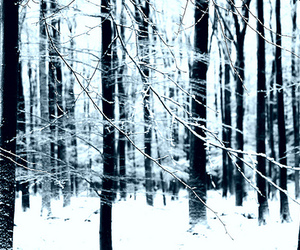 snow, trees, and winter image