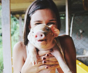pig, cute, and girl image