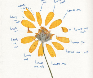 flowers, love, and yellow image
