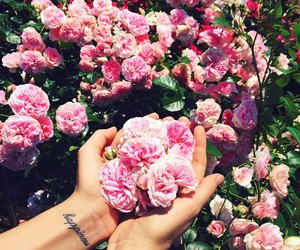 flowers, pink, and happiness image