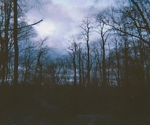 dark, clouds, and forest image
