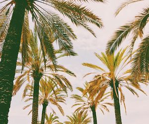 palm trees, tropical, and palmeras image