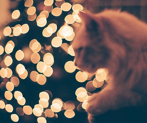 cat, indie, and christmas image