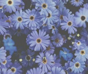 flowers, blue, and purple image