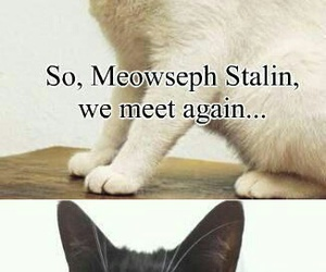 cat, funny, and hitler image